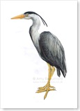 heron-show