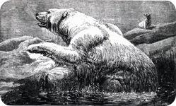 josephwolf-polarbear